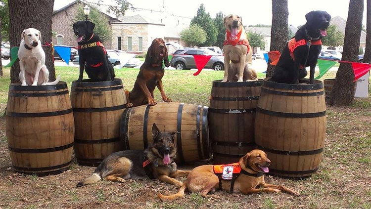 Dogs posing on barrels - Search One Rescue Team - Dallas Ft. Worth K9 Search and Rescue