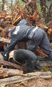 search and rescue dog looking under a pile of wood - Search One Rescue Team