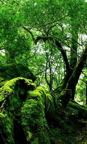 Green lush wooded area
